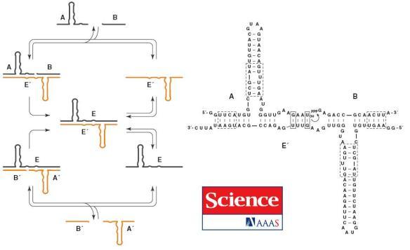 dibujo20090301cross-replicatingrnaenzymes