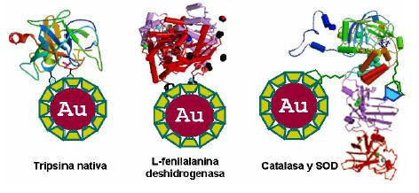 Dibujo20090929_three_gold_nanoparticles_from_Laboratorio_Bioinorgánica_Universidad_La_Habana