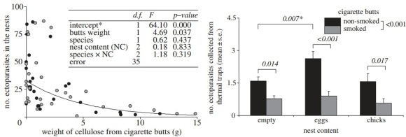 Thermal traps with smoked butts attracted fewer mites than traps with non-smoked butts
