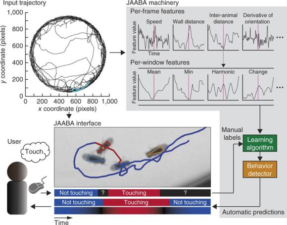 Dibujo20130117 JAABA - interactive machine learning for automatic annotation of animal behavior