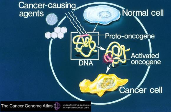 Dibujo20130121 cancer genome atlas - cell - dna - oncogen