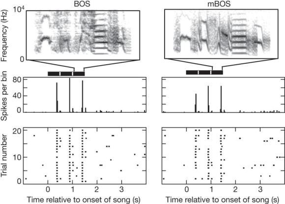 Dibujo20130227 Elemental gesture dynamics are encoded by song premotor cortical neurons