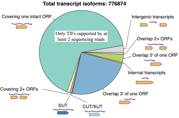 Dibujo20130518 total transcript isoforms supported by at least two sequencing reads