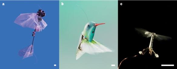 Dibujo20130612 winged victories - biomimetics