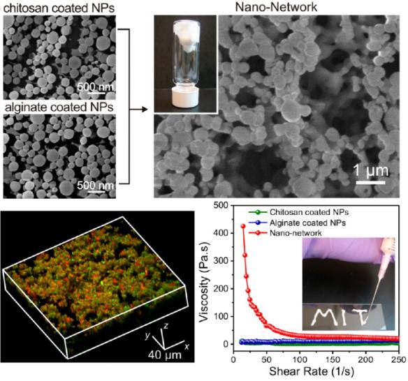 Dibujo201300603 Characterization of the glucose-responsive nano-network