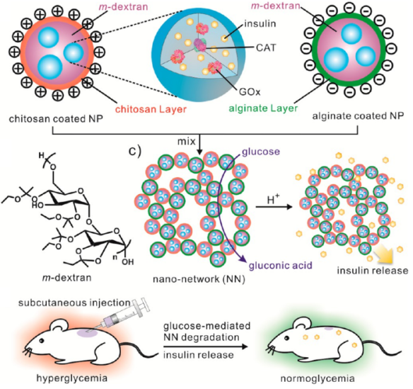 Dibujo201300603 Schematic of the glucose-responsive nano-network