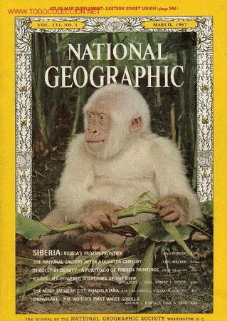 Dibujo201300608 gorilla gorilla - copito de nieve - national geographic cover 1967