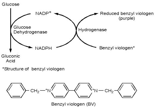 Dibujo20131014 reaction scheme measurement hydrogen by oxidation of glucose - Natalie Portman - 1998